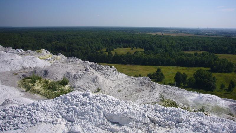 Вид на зеленый лес