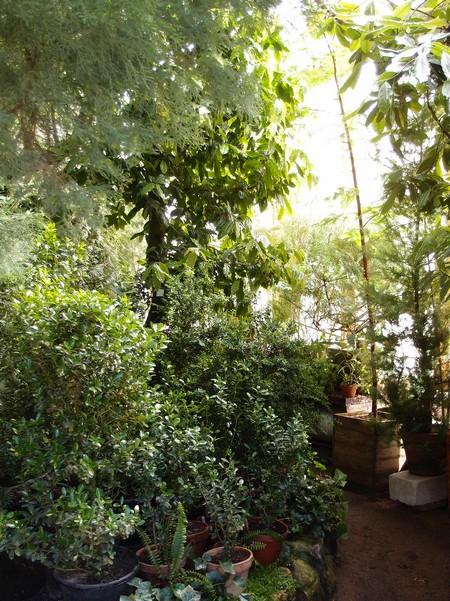 Тропики в оранжерее