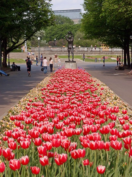 Тюльпаны в парке