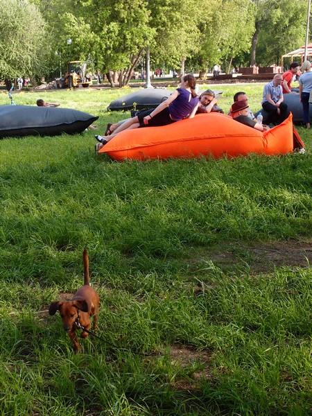 Подушки и такса на лужайке