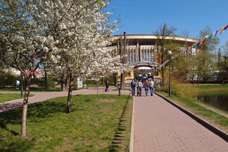 Аллеи и цветущие вишни