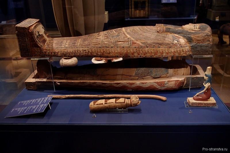 Мумия в саркофаге, мумия кошки