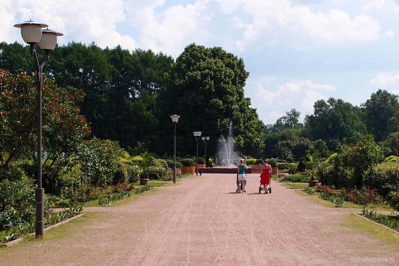 Широкая аллея в парке