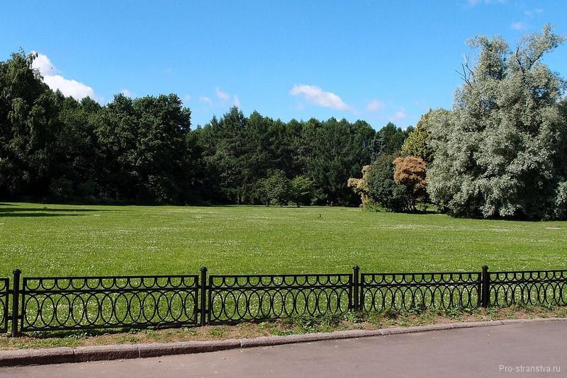 Партер, окруженный деревьями