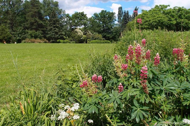 Цветы у поляны