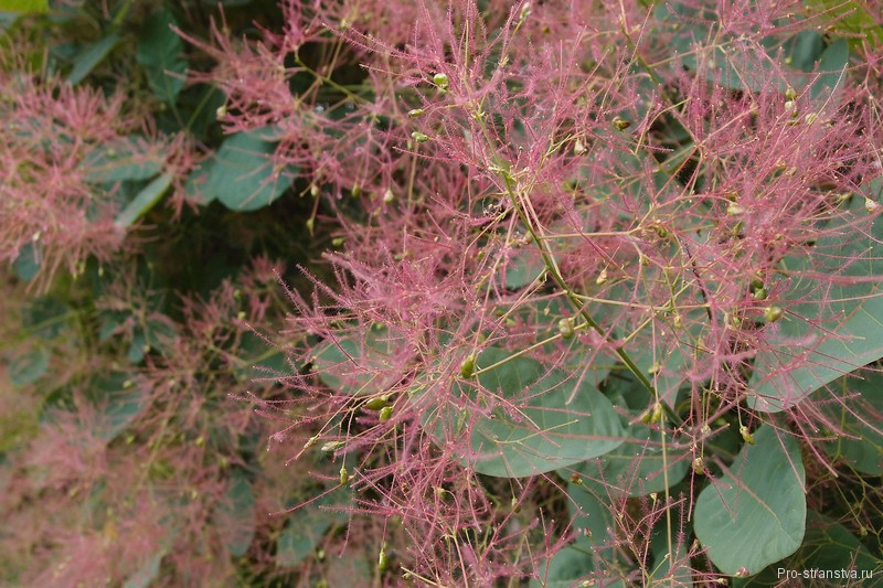 Необычное цветение
