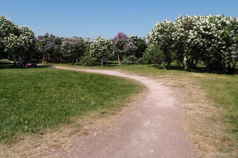 Дорожка в Сиреневом саду
