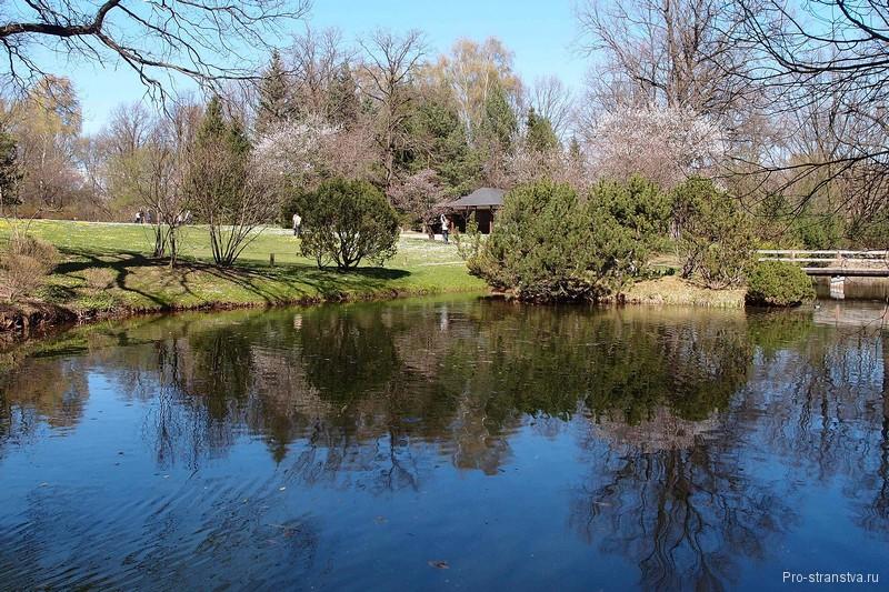 Весенний пруд