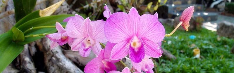 Фестиваль орхидей в Москве