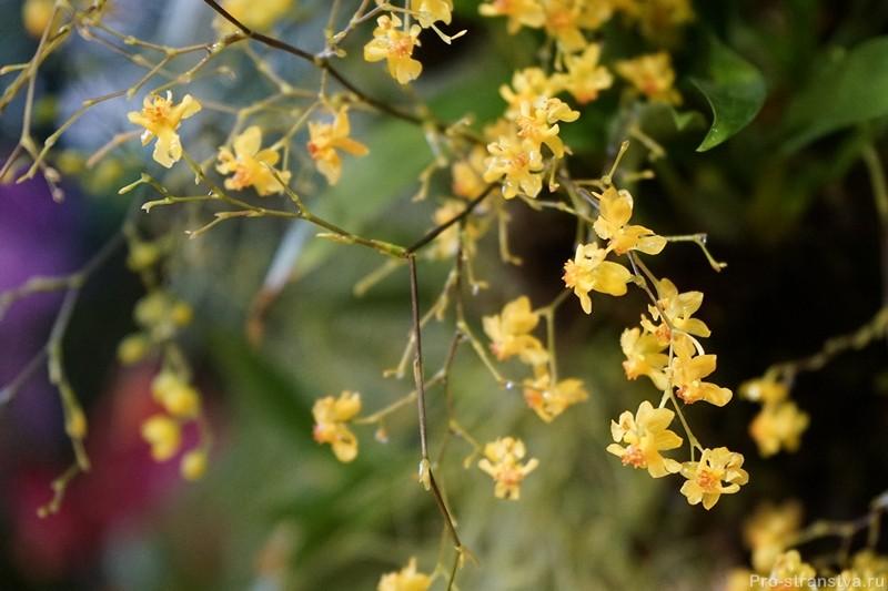 Мини-цветы