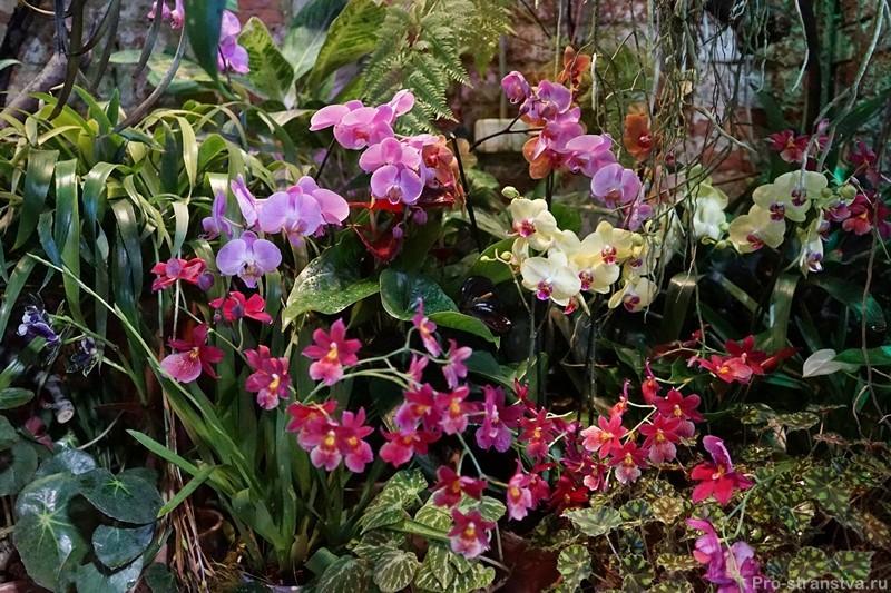 Группа цветущих растений