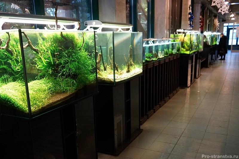 Аквариумы с подводными садами