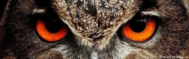 Ночная птица смотрит