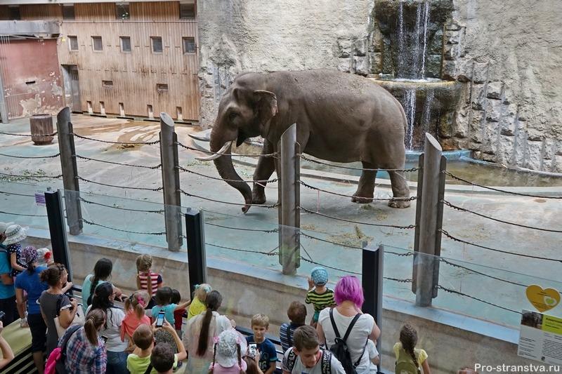 Азиатский слон в слоновнике