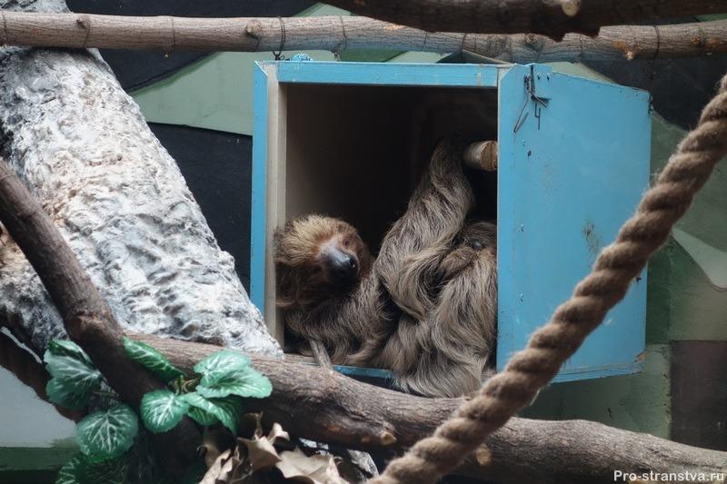 Замечательный ленивец