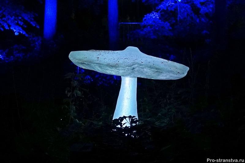 Волшебный гриб