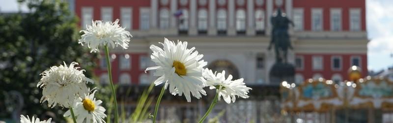 Цветы в День рождения